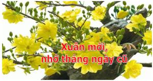 Xuanmoi